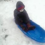 Quinn enjoying first snow fall